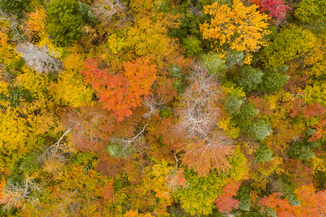 Colorful fall foliage in New Haven, Vermont viewed from above