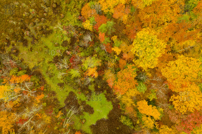 Lush fall foliage in a forest in rural Leicester, Vermont