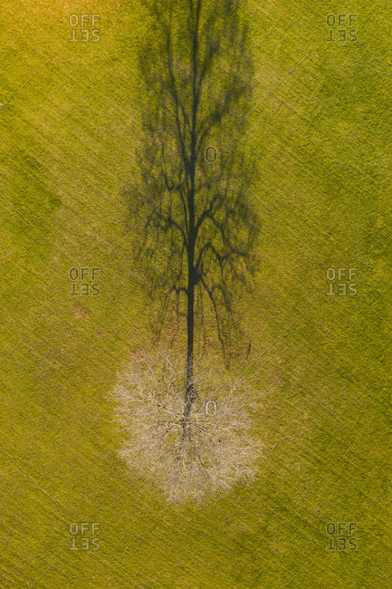 View of a maple tree in fall from above in Weybridge, Vermont
