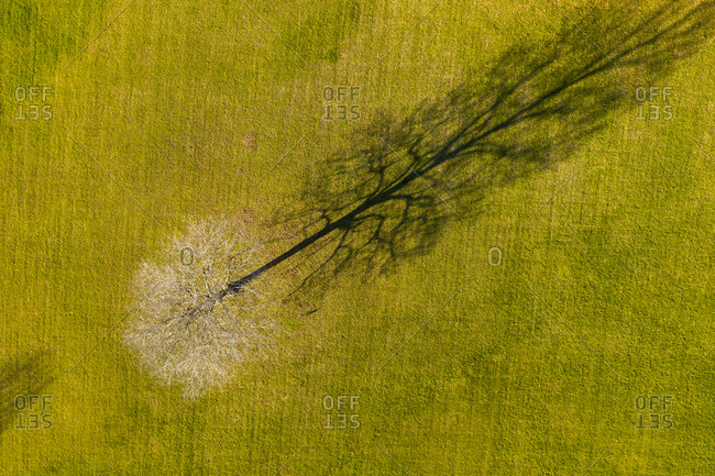 View of a bare maple tree in autumn from above in Weybridge, Vermont