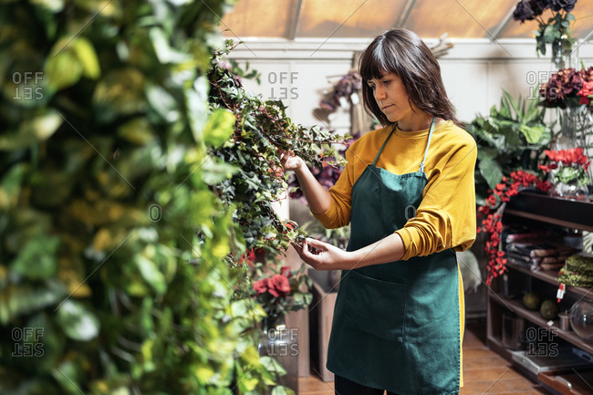 Stock photo of adult woman taking care of flowers and plants in flower shop.