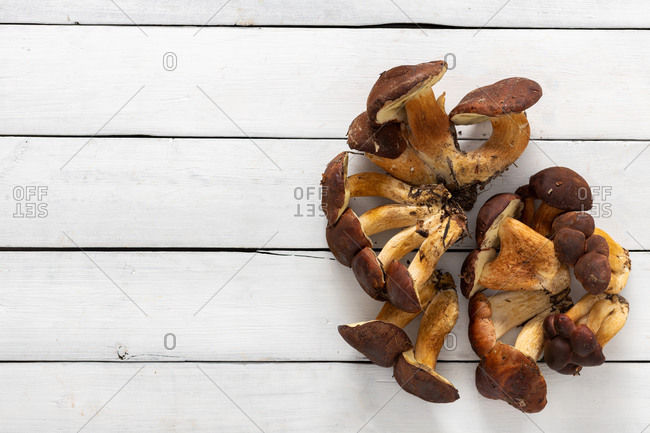 Various wild mushrooms on white wooden background with copy space top view