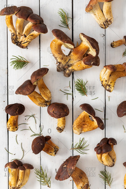 Various wild mushrooms on white wooden background top view