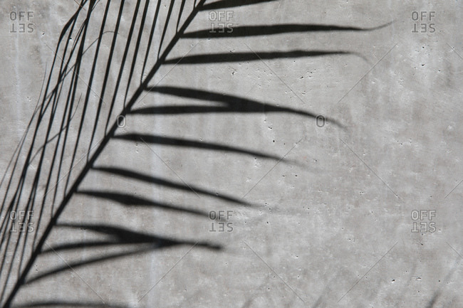 A palm leaf shadow on gray wall