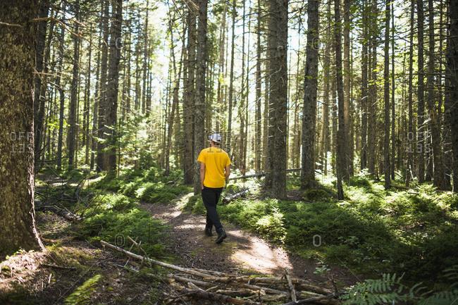 Solo man on a nature walk trail in coastal maine