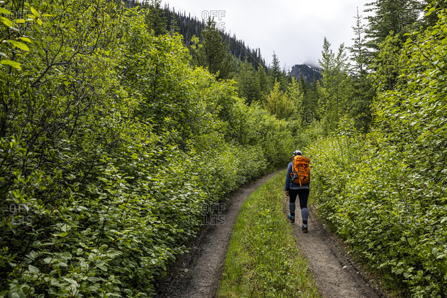 Back view of unrecognizable tourist with backpack walking alone on narrow path leading through green lush forest during hiking in summertime in British Columbia