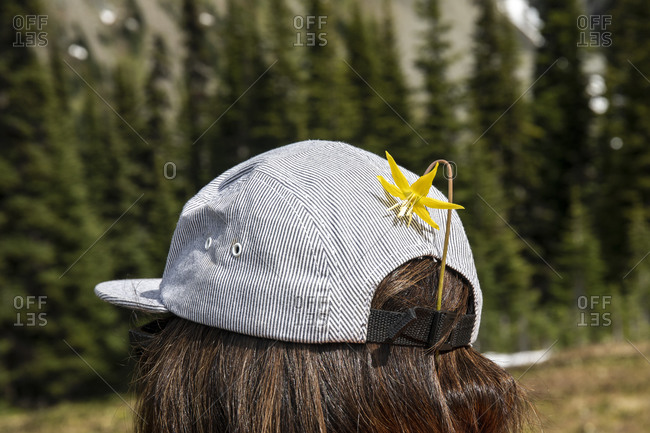 Back view of unrecognizable female hiker with yellow wildflower arranged on cap exploring green coniferous forest in mountains of british columbia