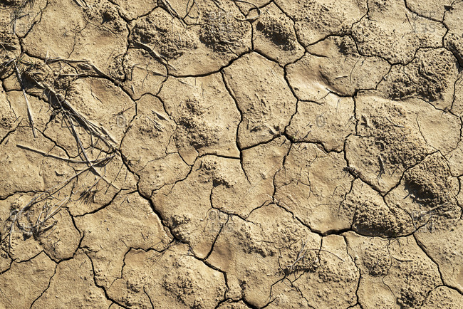 A Cracked dry soil surface