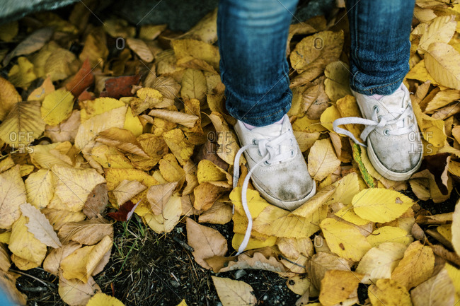 Dirty white untied toddler shoes in yellow leaves in fall
