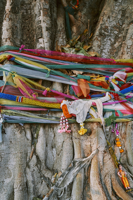 A sacred Banyan tree wrapped in garlands and cloth in downtown Buriram, Thailand