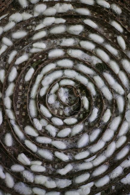 Silk cocoons displayed in a spiral pattern in a rattan basket in Luang Prabang, Laos