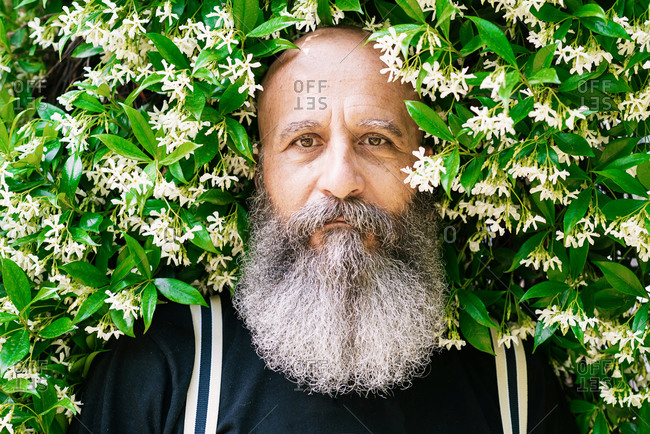 Stylish bearded aged male hipster standing near natural green hedge on street and looking at camera