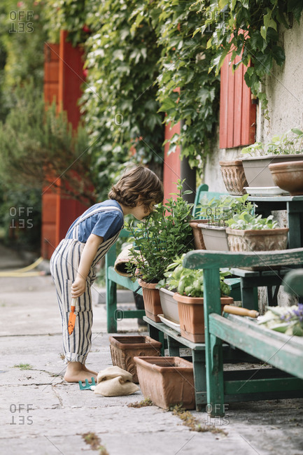 Boy examining potted plant while standing at backyard