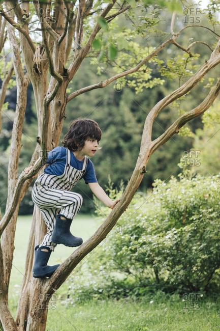Cute boy climbing tree while playing in garden