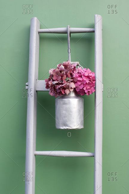 Studio shot of pink hydrangeas blooming in milk jug hanging on simple wooden ladder