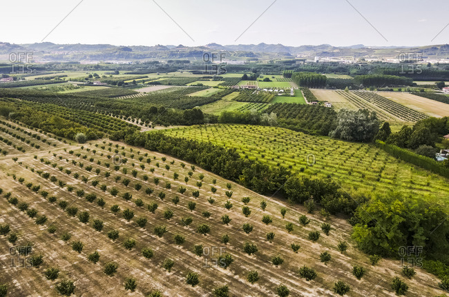 Drone view of field crops growing in rows