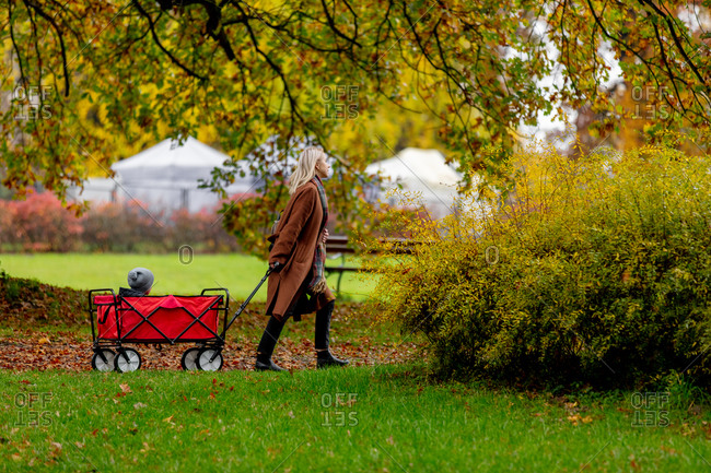 Woman with a child in wagon walking in an autumn park