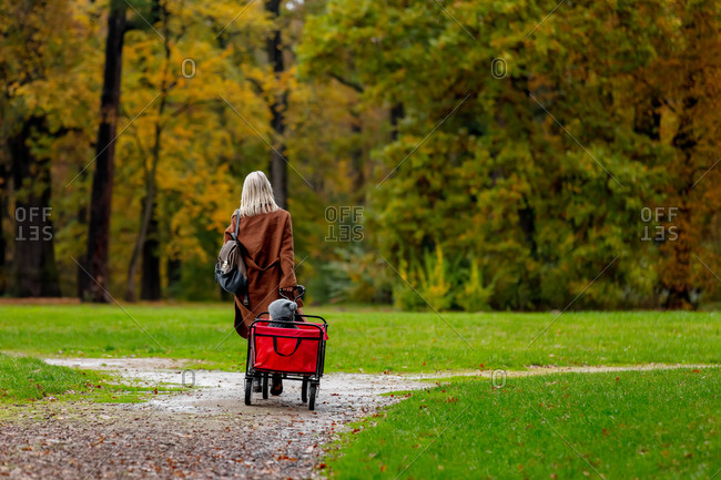Rear view of a woman with a child in wagon walking in an autumn park