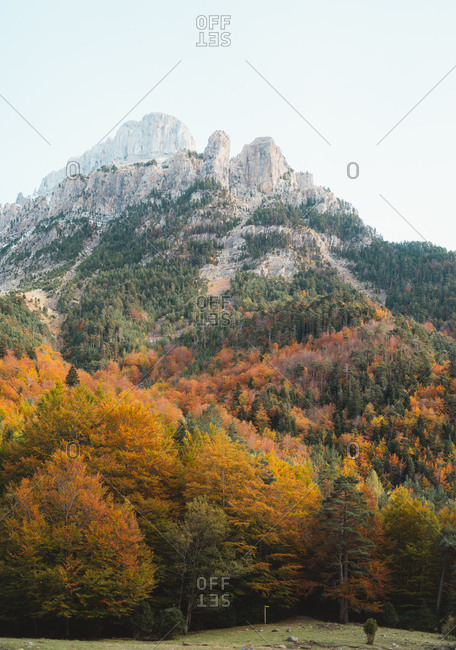 Autumnal Oza forest with a rugged mountain in background