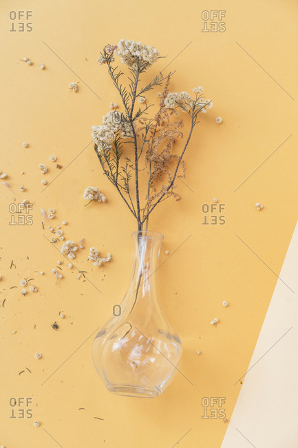 Glass vase with scattered dry flowers petals on colored background