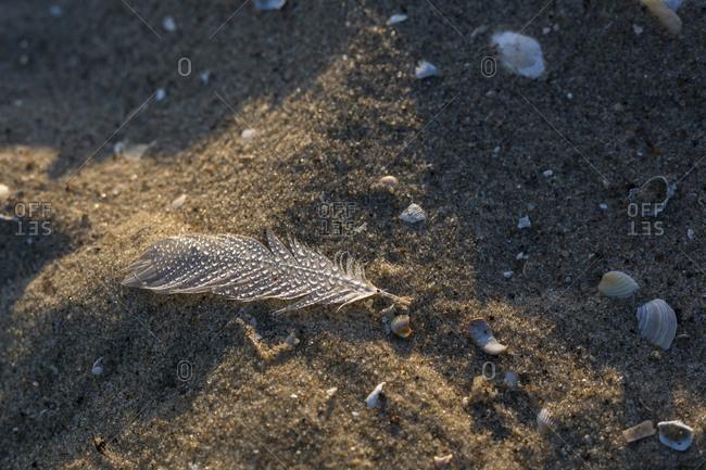 Wet feather lying on beach sand
