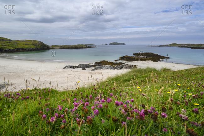UK- Scotland- Wildflowers blooming in front of Bostadh Beach