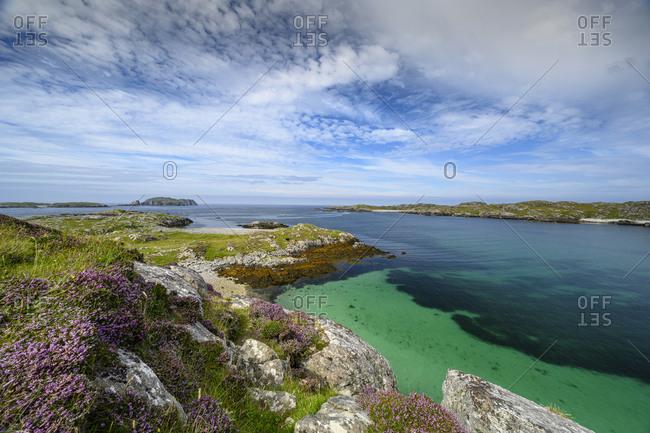 UK- Scotland- Wildflowers blooming along coast of Isle of Lewis