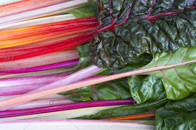 Freshly picked chard, close up