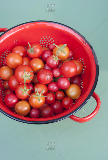 Colander with fresh homegrown tomatoes