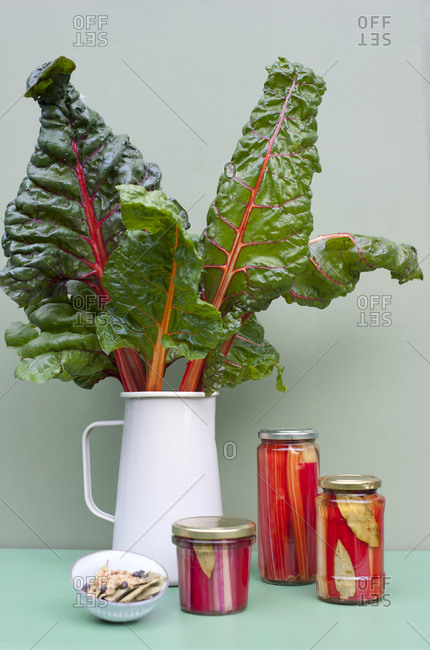 Canned and growing chard in vase