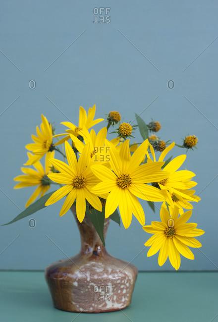 Studio shot of vase with yellow blooming Jerusalem artichoke (Helianthus tuberosus) flowers