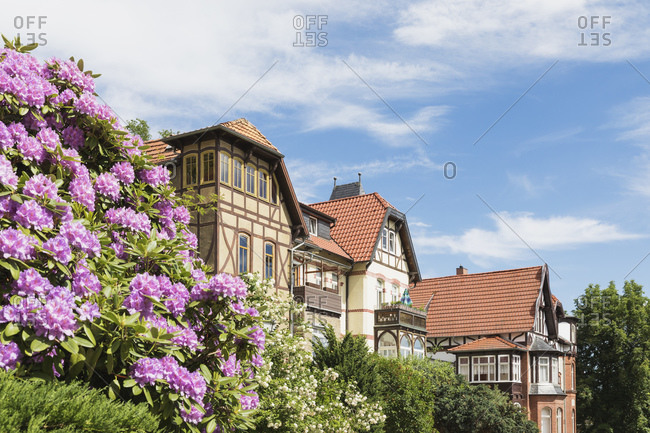 Germany- Thuringia- Eisenach- Flowers blooming in front of historical villas in Predigerberg/Hainstein quarter