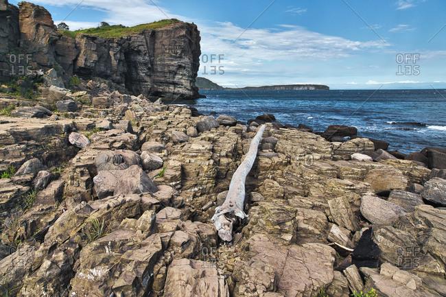 Surface level of driftwood on island at Vladivostok- Russia