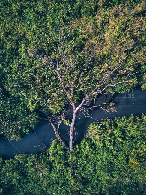 Drone view of fallen tree over stream in green forest