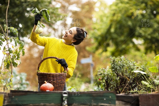 Smiling woman holding kohlrabi while standing by basket at urban garden