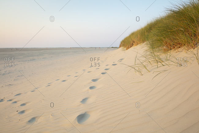 Footprints by marram grass on sand dune at beach against sky during sunset