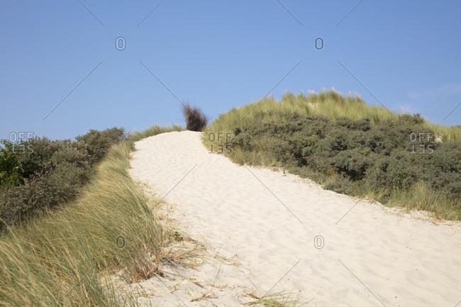 Marram grass on sand dune at beach against blue sky on sunny day