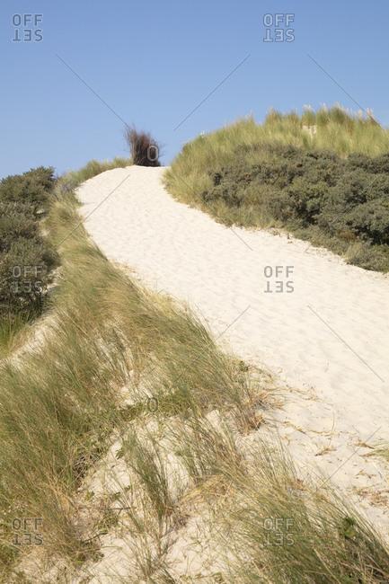 Green marram grass on sand dune at beach against blue sky on sunny day