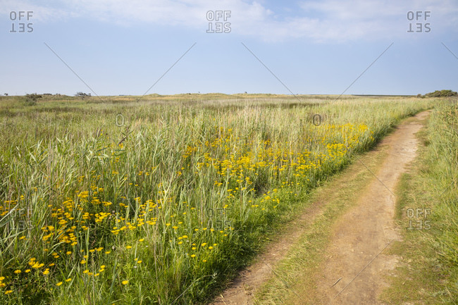 Footpath by green plants on landscape against blue sky during sunny day