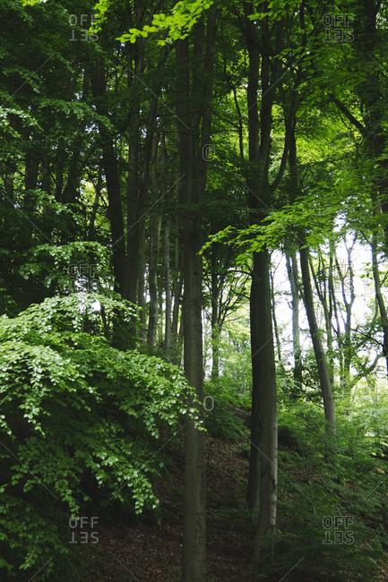 Deciduous forest, teutoburg forest. Wide shot.