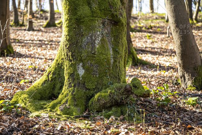 Detailed shot of trunk moss.