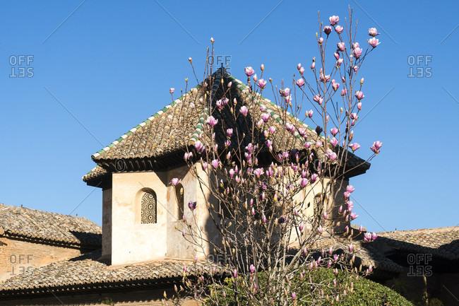 Spain, Granada, alhambra, entrada partal, magnolia