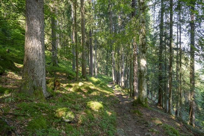 Austria, montafon, hiking trail at gaschurn.