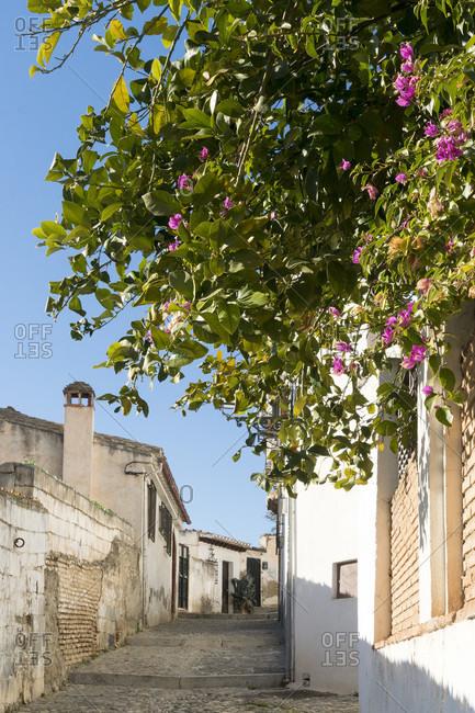 Granada (Spain), albaicin, alley, morning light, bougainvillea