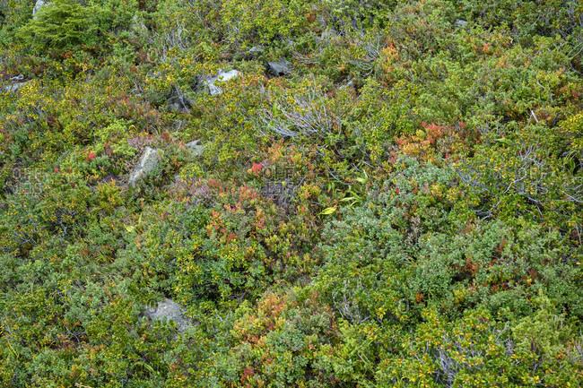 Austria, montafon, schruns, vegetation at the sennigratbahn.