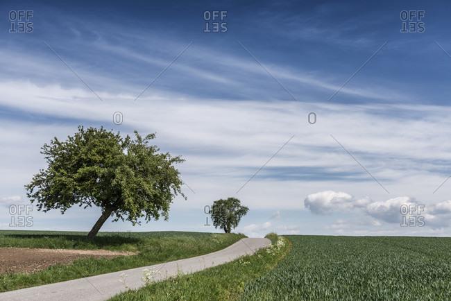 Michelstadt, vielbrunn, hessen, germany. path through the countryside.