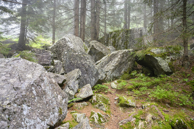 Austria, montafon, mountain forest with rocks at partenen.