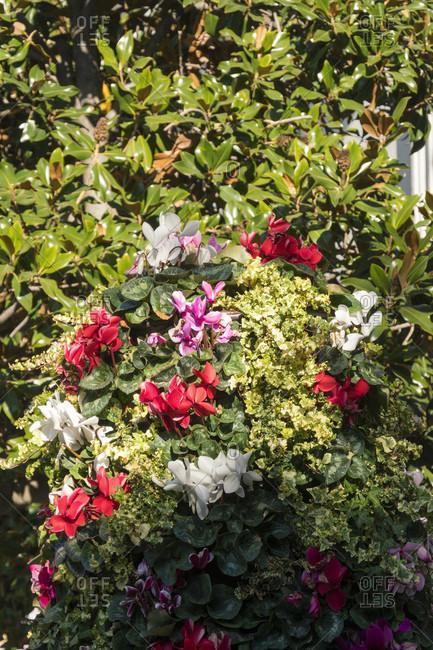 Granada (spain), old town, plaza del carmen, floral decoration