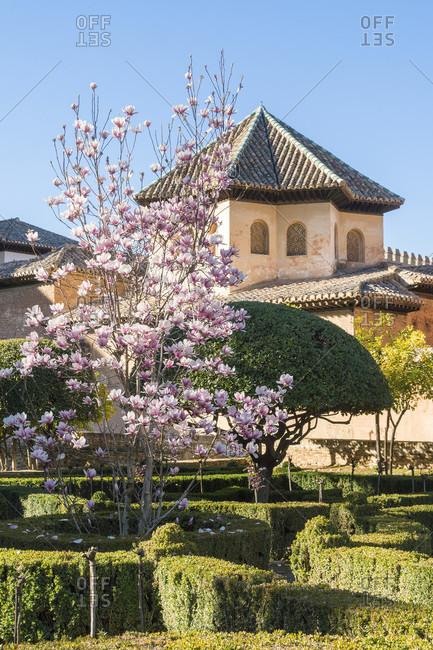 Spain, granada, alhambra, partal, palacio del partal, blooming magnolia