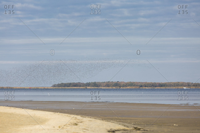 Huge flock of birds near freest, mecklenburg-west pomerania, Germany